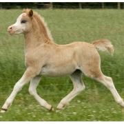 gails-foals-2011-006