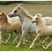 gails-foals-2011-009