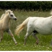 gails-foals-2011-010