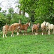 playboy-and-foals-plus-hens-039
